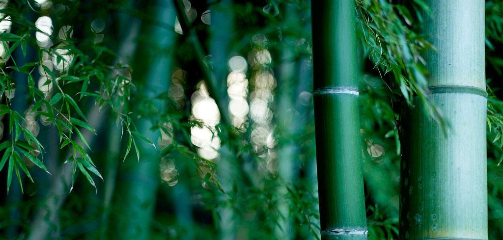 Bamboo base du silicium organique